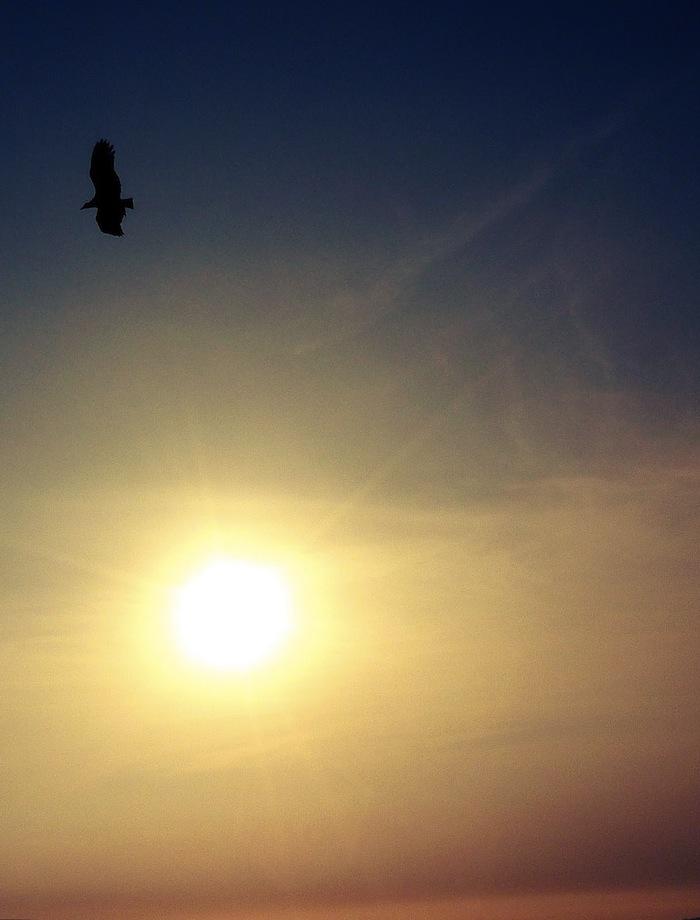 oiseau+noir+anne