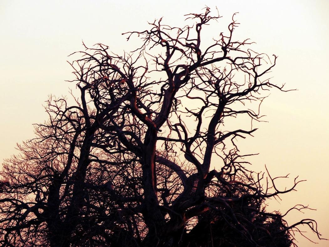 arbreivan